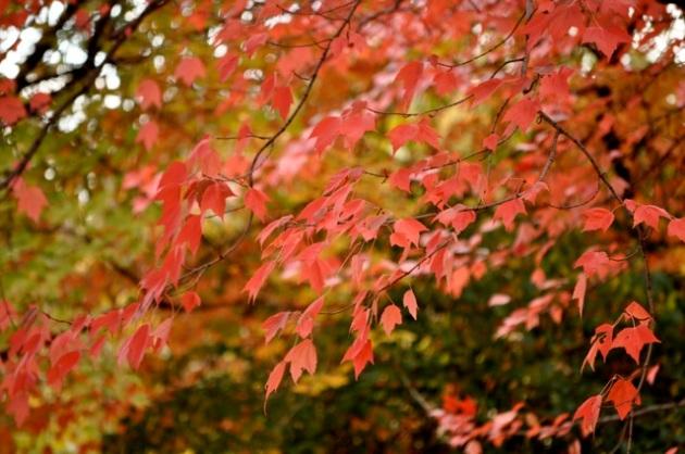 fall15